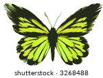 butterfly   Shutterstock . vector #3268488