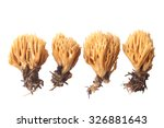 Ramaria Flava Isolated On Whit...