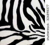 Texture Background Zebra