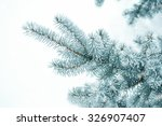 Pine Branches Covered With...