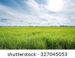 paddy jasmine rice farm in...   Shutterstock . vector #327045053