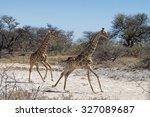 two angolan giraffes  giraffa...   Shutterstock . vector #327089687