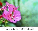 Wet Geranium Flower