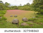 Giant Tortoises In A Shallow...