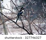 magpie on a snowy branch in... | Shutterstock . vector #327746327