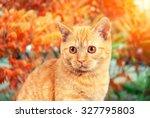 Portrait Of Cat Walking In...