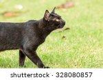 black cat walking on the green... | Shutterstock . vector #328080857
