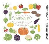 vegetables collection. vector... | Shutterstock .eps vector #329018387