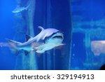 Shark In The Pool Underwater...