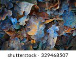 frozen oak leafs   abstract... | Shutterstock . vector #329468507
