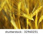 an image of yellow grain of... | Shutterstock . vector #32960251