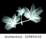 xray image of a flower ... | Shutterstock . vector #329854133