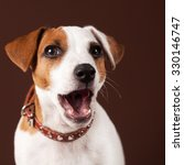 surprised dog. puppy with open... | Shutterstock . vector #330146747