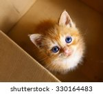 red little blue eye kitten in... | Shutterstock . vector #330164483