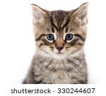 Stock photo cute baby tabby kitten isolated on white background 330244607