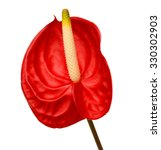 Object On White   Anthurium...