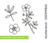 Dasiphora Fruticosa   Siberian...