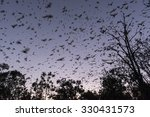 bats or little red flying foxes ... | Shutterstock . vector #330431573
