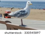 Large Seagull On A Railing In...