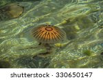 seaweed and jellyfish on irish... | Shutterstock . vector #330650147