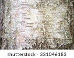 Texture. Tree Bark.