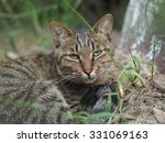 the lovely cat  in the grassland | Shutterstock . vector #331069163