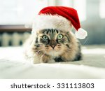 Christmas Cat In Red Santa...