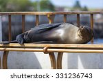Sleeping Sea Lion On A Bench I...