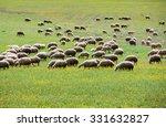 Herd Of Sheep In Flower Field
