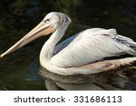 Pink Backed Pelican Floating I...