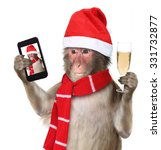 Funny Monkey With Christmas...