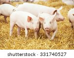 Two Young Piglet On Hay And...