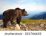 big brown bear  ursus arctos ... | Shutterstock . vector #331766633
