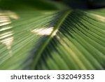 calathea's beautiful leaf veins ... | Shutterstock . vector #332049353