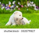 Stock photo white swiss shepherd s puppy hugging kitten on green grass 332079827