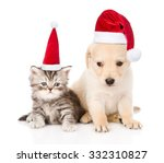 Stock photo golden retriever puppy dog and tabby cat with red christmas hats sitting together isolated on 332310827