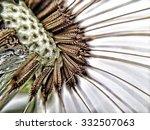 close up of dandelion seed head | Shutterstock . vector #332507063