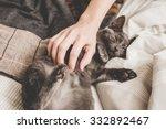 Stock photo kitten in bed 332892467