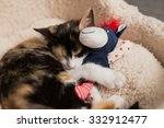 Stock photo tired kitten cuddles with stuffed animal 332912477