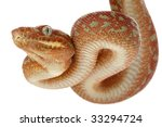 Постер, плакат: Emerald tree boa Corallus