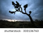 arched joshua tree silhouette...   Shutterstock . vector #333136763