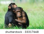 close up of two cute...   Shutterstock . vector #33317668