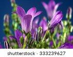 Ringtone Or Campanula   Purple...