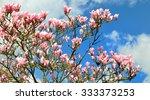 Flowers Of Magnolia Tree