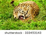large male jaguar in the wild... | Shutterstock . vector #333453143