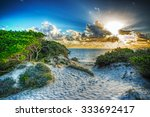 Pine Trees And Dunes In Maria...
