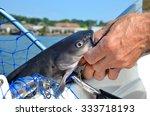 wild freshwater catfish caught... | Shutterstock . vector #333718193