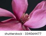 A Breathtaking Pink Magnolia...