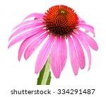 Coneflower  Echinacea Purpurea...