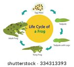 this picture shows the life... | Shutterstock .eps vector #334313393